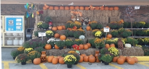 Photo of the Day: Fall Display at Harps